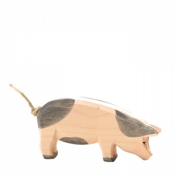 Schwein, Kopf hoch, gefleckt